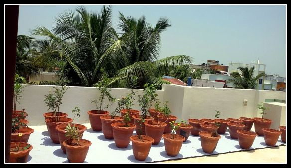 Terrace garden spaces for Terrace kitchen garden